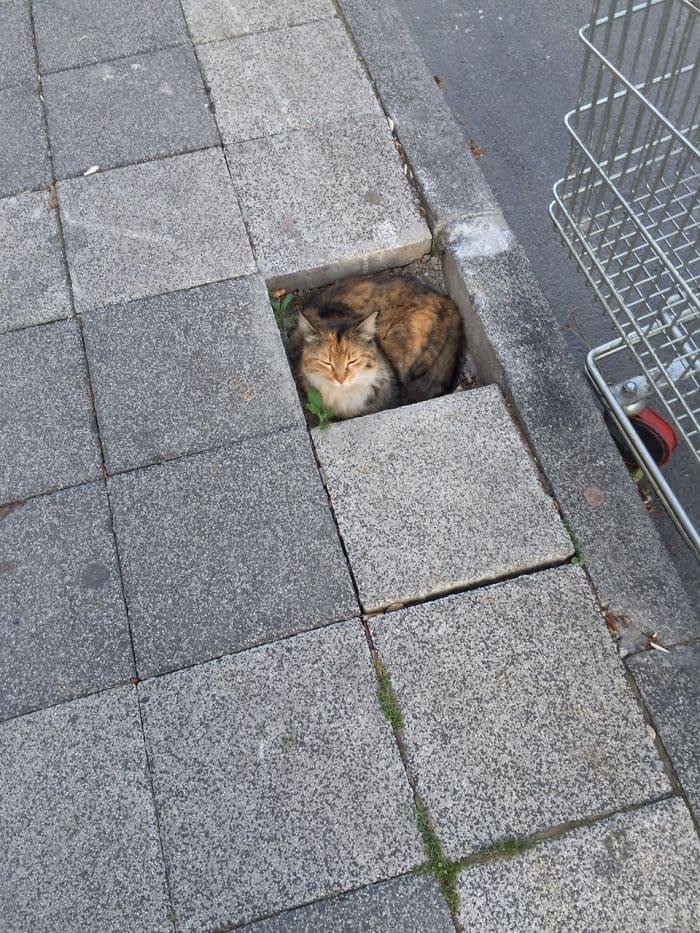 cat in sidewalk block space if i fits i sits, if i fits i sits, if i fit i sit, if it fits i sits, if i fits i sits cat, if i fit i sit cat, if it fits i sits cats, cats if i fits i sits, cat meme if it fits i sits, cat if i fits i sits, cat if it fits i sits, if i fit i sit picture, if i fits i sits picture, if i fits i sits pictures, if i fit i sit pictures, if i fits i sits image, if i fits i sits images, if i fit i sit image, if i fit i sit images, cats fitting and sitting, cats if i fits i sits picture, cats if i fits i sits pictures, cats if i fits i sits image, cats if i fits i sits images