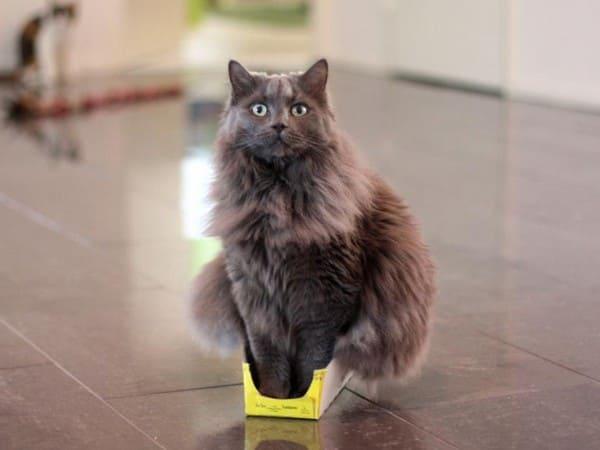 cat sitting in tiny box if i fits i sits, if i fits i sits, if i fit i sit, if it fits i sits, if i fits i sits cat, if i fit i sit cat, if it fits i sits cats, cats if i fits i sits, cat meme if it fits i sits, cat if i fits i sits, cat if it fits i sits, if i fit i sit picture, if i fits i sits picture, if i fits i sits pictures, if i fit i sit pictures, if i fits i sits image, if i fits i sits images, if i fit i sit image, if i fit i sit images, cats fitting and sitting, cats if i fits i sits picture, cats if i fits i sits pictures, cats if i fits i sits image, cats if i fits i sits images