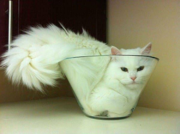 cat in bowl if i fits i sits, cute white cat in bowl if i fits i sits