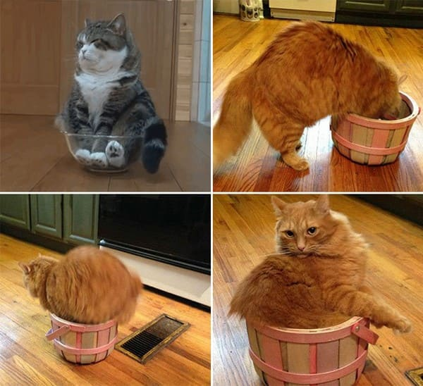 cat in bowl and basket if i fits i sits, if i fits i sits, if i fit i sit, if it fits i sits, if i fits i sits cat, if i fit i sit cat, if it fits i sits cats, cats if i fits i sits, cat meme if it fits i sits, cat if i fits i sits, cat if it fits i sits, if i fit i sit picture, if i fits i sits picture, if i fits i sits pictures, if i fit i sit pictures, if i fits i sits image, if i fits i sits images, if i fit i sit image, if i fit i sit images, cats fitting and sitting, cats if i fits i sits picture, cats if i fits i sits pictures, cats if i fits i sits image, cats if i fits i sits images