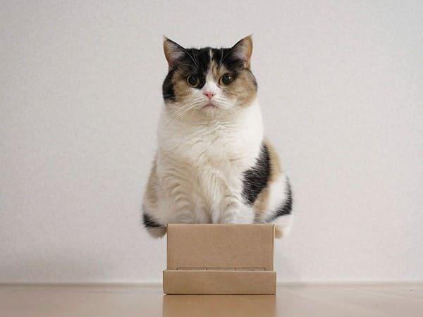 cat sitting in small box if i fits i sits, cat in small box if i fit i sit