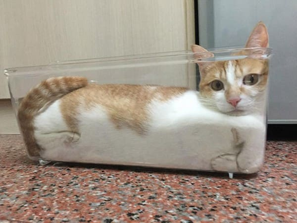 cat in container if i fits i sits, cat in cube container if i fit i sit