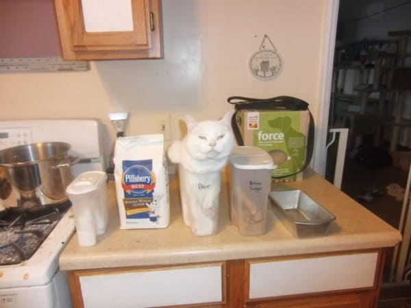 cat in flour container if i fits i sits, white cat if i fits i sits