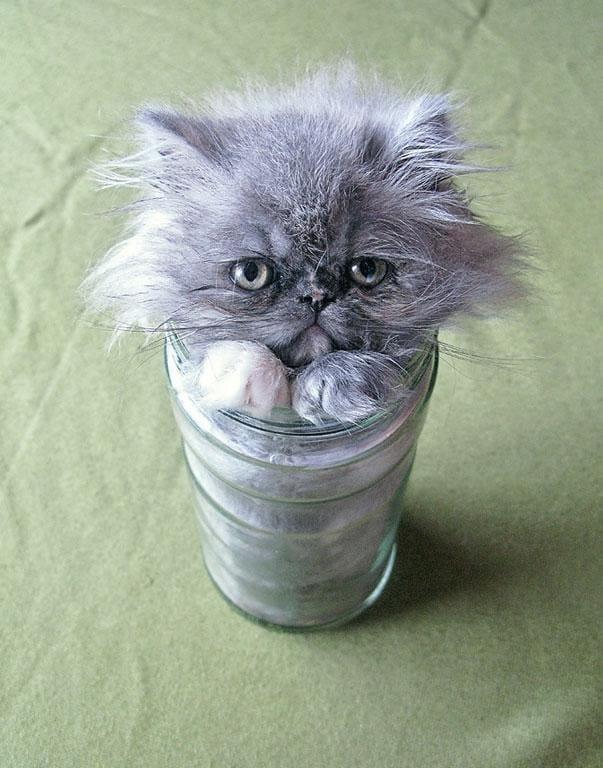 cute cat in jar if i fit i sit, cute cat in jar if i fits i sits