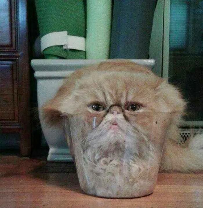 cat in bowl fitting and sitting, cat in bowl if i fit i sit