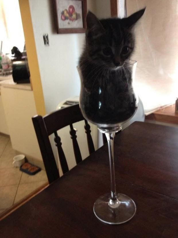 kitten in wine glass fitting and sitting, kitten in wine glass if i fit i sit, if i fits i sits, if i fit i sit, if it fits i sits, if i fits i sits cat, if i fit i sit cat, if it fits i sits cats, cats if i fits i sits, cat meme if it fits i sits, cat if i fits i sits, cat if it fits i sits, if i fit i sit picture, if i fits i sits picture, if i fits i sits pictures, if i fit i sit pictures, if i fits i sits image, if i fits i sits images, if i fit i sit image, if i fit i sit images, cats fitting and sitting, cats if i fits i sits picture, cats if i fits i sits pictures, cats if i fits i sits image, cats if i fits i sits images