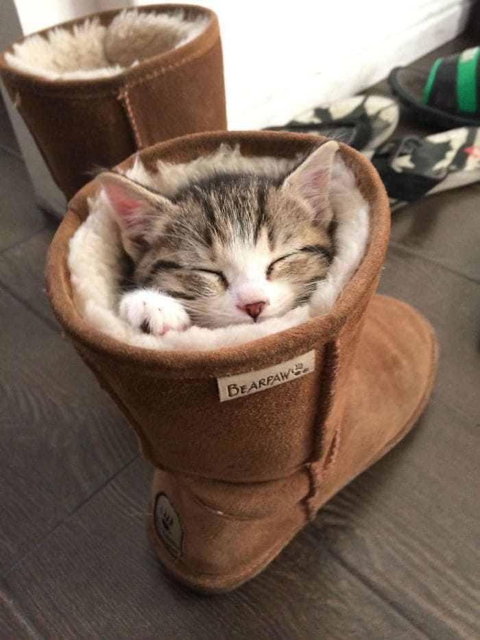 cat in cozy boot if i fits i sits