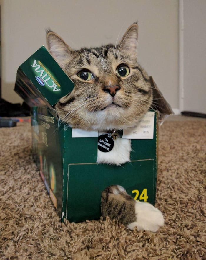 cat in activia box if i fits i sits, if i fits i sits, if i fit i sit, if it fits i sits, if i fits i sits cat, if i fit i sit cat, if it fits i sits cats, cats if i fits i sits, cat meme if it fits i sits, cat if i fits i sits, cat if it fits i sits, if i fit i sit picture, if i fits i sits picture, if i fits i sits pictures, if i fit i sit pictures, if i fits i sits image, if i fits i sits images, if i fit i sit image, if i fit i sit images, cats fitting and sitting, cats if i fits i sits picture, cats if i fits i sits pictures, cats if i fits i sits image, cats if i fits i sits images