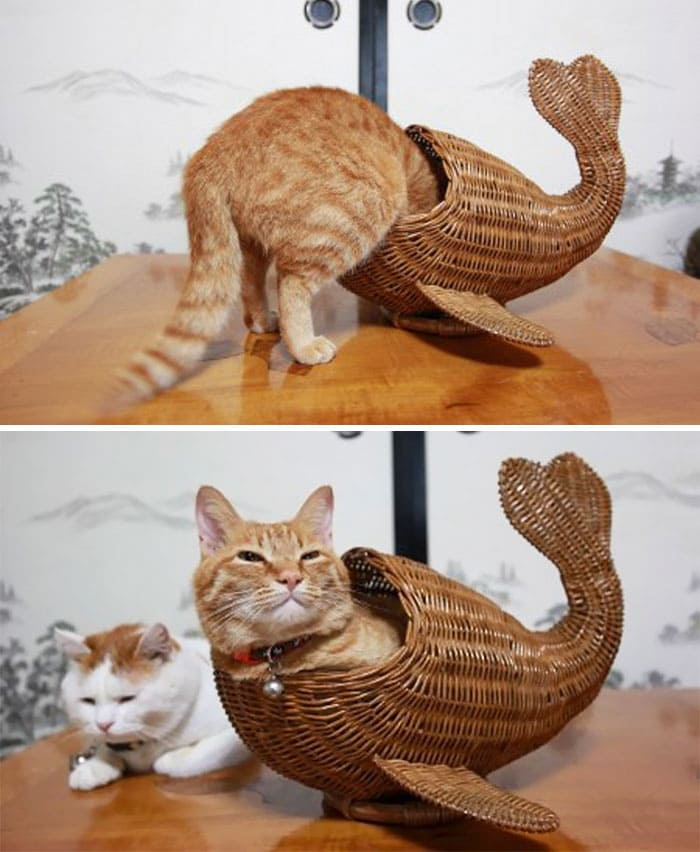 cat in whale basket if i fits i sits, cat in some kind of basket if i fits i sits