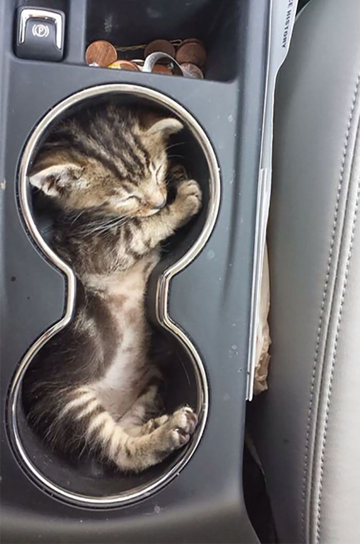 kitten in cup holders if i fits i sits, if i fits i sits, if i fit i sit, if it fits i sits, if i fits i sits cat, if i fit i sit cat, if it fits i sits cats, cats if i fits i sits, cat meme if it fits i sits, cat if i fits i sits, cat if it fits i sits, if i fit i sit picture, if i fits i sits picture, if i fits i sits pictures, if i fit i sit pictures, if i fits i sits image, if i fits i sits images, if i fit i sit image, if i fit i sit images, cats fitting and sitting, cats if i fits i sits picture, cats if i fits i sits pictures, cats if i fits i sits image, cats if i fits i sits images