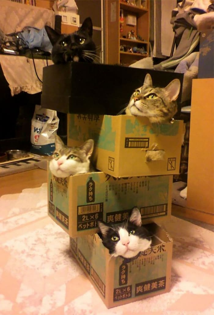 various cats in boxes if i fits i sits, if i fits i sits, if i fit i sit, if it fits i sits, if i fits i sits cat, if i fit i sit cat, if it fits i sits cats, cats if i fits i sits, cat meme if it fits i sits, cat if i fits i sits, cat if it fits i sits, if i fit i sit picture, if i fits i sits picture, if i fits i sits pictures, if i fit i sit pictures, if i fits i sits image, if i fits i sits images, if i fit i sit image, if i fit i sit images, cats fitting and sitting, cats if i fits i sits picture, cats if i fits i sits pictures, cats if i fits i sits image, cats if i fits i sits images