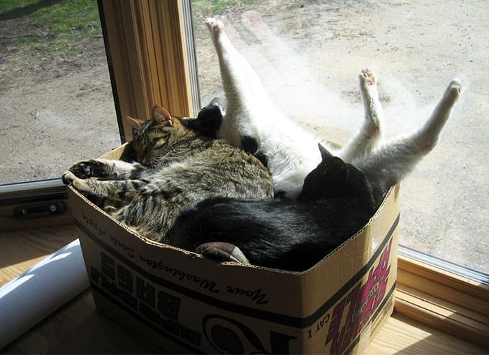 a bunch of cats in a box if we fits we sits, a bunch of cats in box if i fits i sits