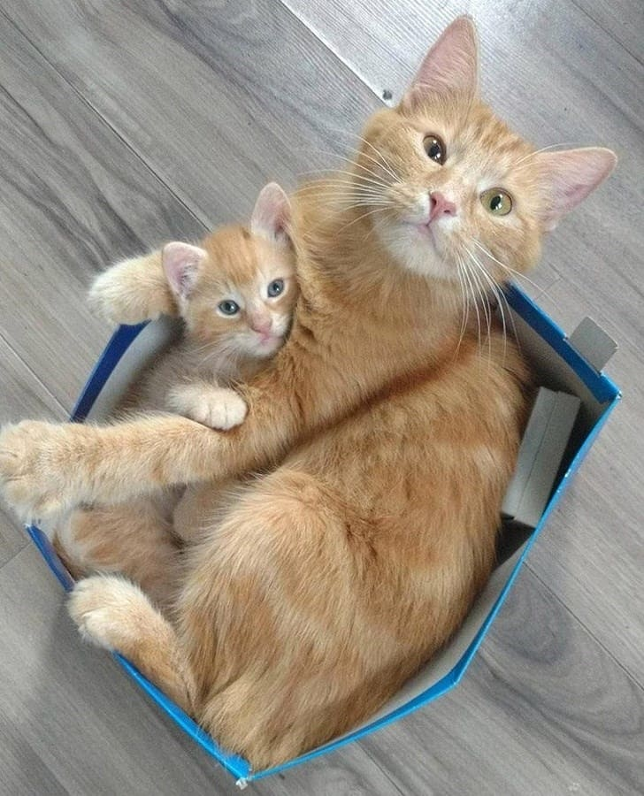 cat and kitten in box if we fits we sits, cat and kitten in box if i fits i sits