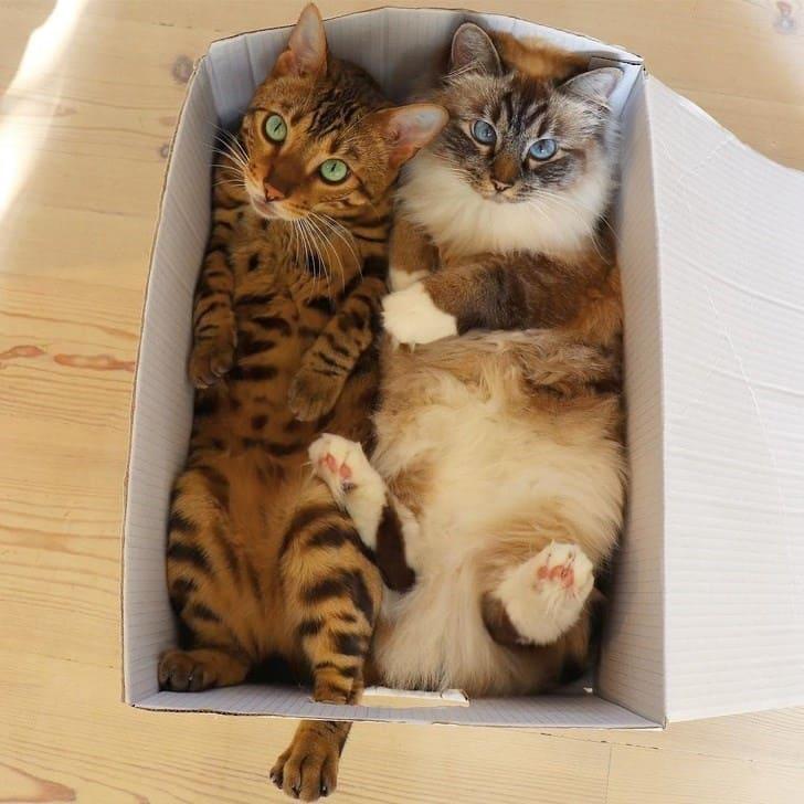 two cats in box if i fits i sits, if i fits i sits, if i fit i sit, if it fits i sits, if i fits i sits cat, if i fit i sit cat, if it fits i sits cats, cats if i fits i sits, cat meme if it fits i sits, cat if i fits i sits, cat if it fits i sits, if i fit i sit picture, if i fits i sits picture, if i fits i sits pictures, if i fit i sit pictures, if i fits i sits image, if i fits i sits images, if i fit i sit image, if i fit i sit images, cats fitting and sitting, cats if i fits i sits picture, cats if i fits i sits pictures, cats if i fits i sits image, cats if i fits i sits images