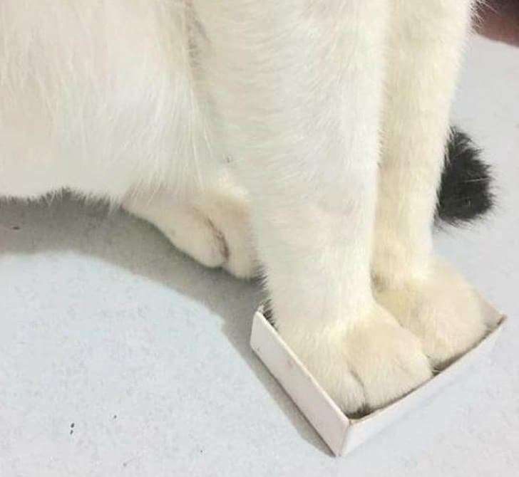 cute cat paws in box if i fits i sits
