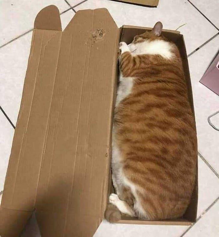 cat lying in box if i fits i sits, if i fits i sits, if i fit i sit, if it fits i sits, if i fits i sits cat, if i fit i sit cat, if it fits i sits cats, cats if i fits i sits, cat meme if it fits i sits, cat if i fits i sits, cat if it fits i sits, if i fit i sit picture, if i fits i sits picture, if i fits i sits pictures, if i fit i sit pictures, if i fits i sits image, if i fits i sits images, if i fit i sit image, if i fit i sit images, cats fitting and sitting, cats if i fits i sits picture, cats if i fits i sits pictures, cats if i fits i sits image, cats if i fits i sits images