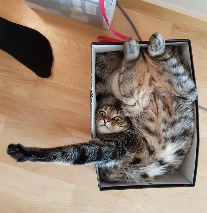 cat awkwardly in box if i fits i sits