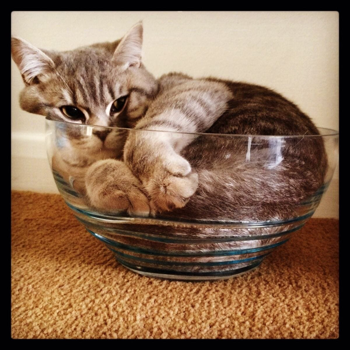 adorable cat in small bowl if i fits i sits, if i fits i sits, if i fit i sit, if it fits i sits, if i fits i sits cat, if i fit i sit cat, if it fits i sits cats, cats if i fits i sits, cat meme if it fits i sits, cat if i fits i sits, cat if it fits i sits, if i fit i sit picture, if i fits i sits picture, if i fits i sits pictures, if i fit i sit pictures, if i fits i sits image, if i fits i sits images, if i fit i sit image, if i fit i sit images, cats fitting and sitting, cats if i fits i sits picture, cats if i fits i sits pictures, cats if i fits i sits image, cats if i fits i sits images