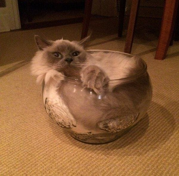cat chilling in bowl if i fits i sits, cat chilling in bowl if i fit i sit