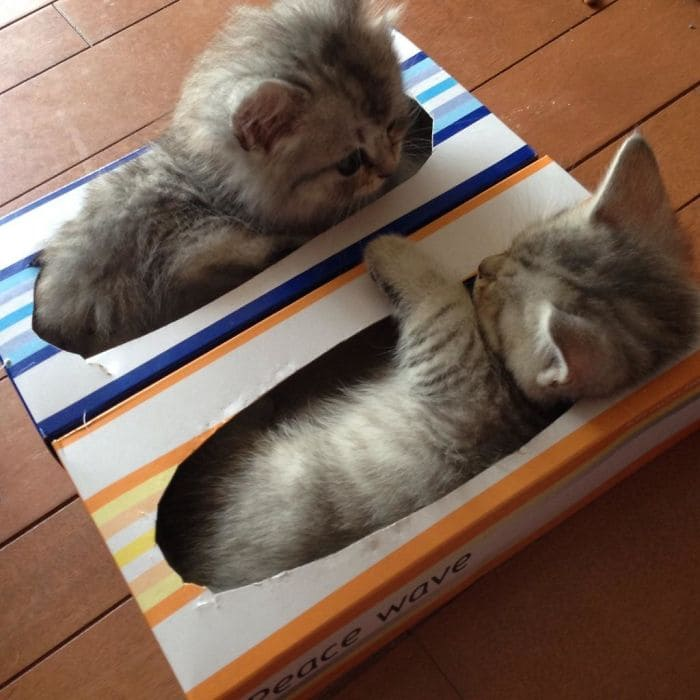 kittens in what appears to be facial tissue boxes if i fits i sits, cute kittens in boxes fitting and sitting, if i fits i sits, if i fit i sit, if it fits i sits, if i fits i sits cat, if i fit i sit cat, if it fits i sits cats, cats if i fits i sits, cat meme if it fits i sits, cat if i fits i sits, cat if it fits i sits, if i fit i sit picture, if i fits i sits picture, if i fits i sits pictures, if i fit i sit pictures, if i fits i sits image, if i fits i sits images, if i fit i sit image, if i fit i sit images, cats fitting and sitting, cats if i fits i sits picture, cats if i fits i sits pictures, cats if i fits i sits image, cats if i fits i sits images
