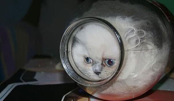 cat in jar if i fit i sit, cat in jar if i fits i sits, if i fits i sits, if i fit i sit, if it fits i sits, if i fits i sits cat, if i fit i sit cat, if it fits i sits cats, cats if i fits i sits, cat meme if it fits i sits, cat if i fits i sits, cat if it fits i sits, if i fit i sit picture, if i fits i sits picture, if i fits i sits pictures, if i fit i sit pictures, if i fits i sits image, if i fits i sits images, if i fit i sit image, if i fit i sit images, cats fitting and sitting, cats if i fits i sits picture, cats if i fits i sits pictures, cats if i fits i sits image, cats if i fits i sits images