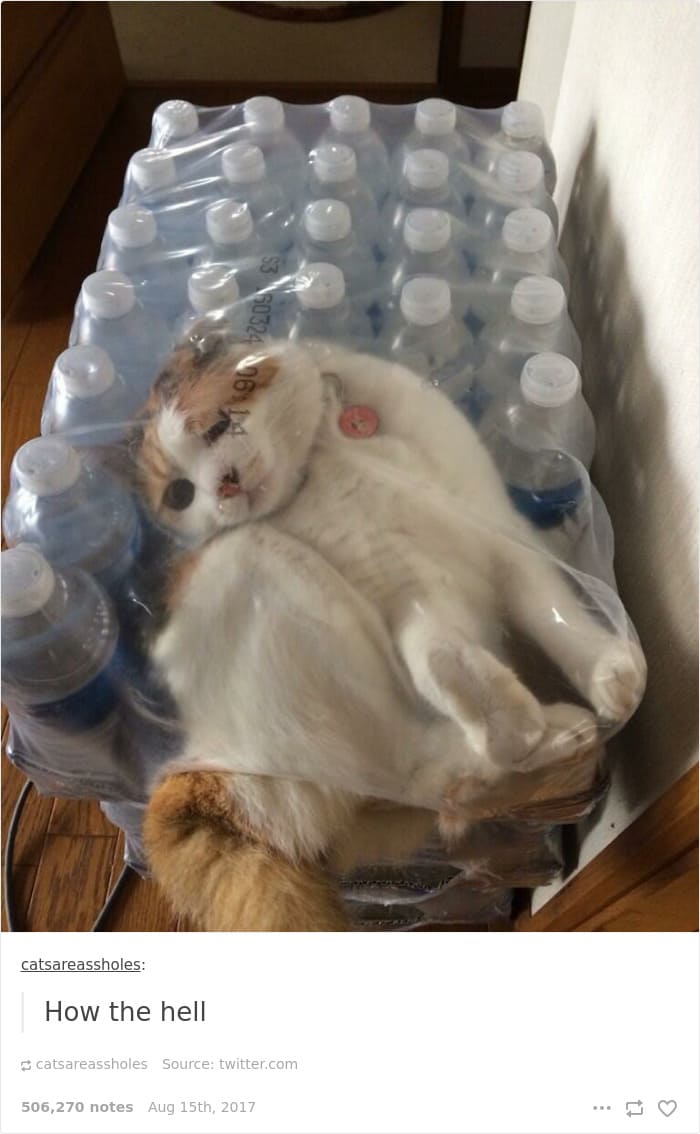 cat awkwardly in bottle package if i fits i sits, if i fits i sits, if i fit i sit, if it fits i sits, if i fits i sits cat, if i fit i sit cat, if it fits i sits cats, cats if i fits i sits, cat meme if it fits i sits, cat if i fits i sits, cat if it fits i sits, if i fit i sit picture, if i fits i sits picture, if i fits i sits pictures, if i fit i sit pictures, if i fits i sits image, if i fits i sits images, if i fit i sit image, if i fit i sit images, cats fitting and sitting, cats if i fits i sits picture, cats if i fits i sits pictures, cats if i fits i sits image, cats if i fits i sits images