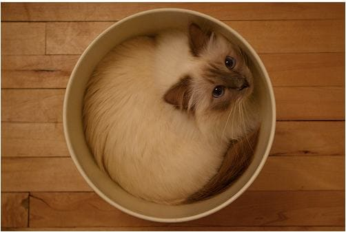 cute cat in trash can if i fits i sits, if i fits i sits, if i fit i sit, if it fits i sits, if i fits i sits cat, if i fit i sit cat, if it fits i sits cats, cats if i fits i sits, cat meme if it fits i sits, cat if i fits i sits, cat if it fits i sits, if i fit i sit picture, if i fits i sits picture, if i fits i sits pictures, if i fit i sit pictures, if i fits i sits image, if i fits i sits images, if i fit i sit image, if i fit i sit images, cats fitting and sitting, cats if i fits i sits picture, cats if i fits i sits pictures, cats if i fits i sits image, cats if i fits i sits images