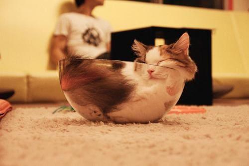 cat sleeping in bowl if i fits i sits, cat sleeping in bowl if i fit i sit
