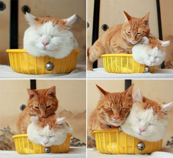 cats sharing basket if i fits i sits, cats in basket fitting and sitting, if i fits i sits, if i fit i sit, if it fits i sits, if i fits i sits cat, if i fit i sit cat, if it fits i sits cats, cats if i fits i sits, cat meme if it fits i sits, cat if i fits i sits, cat if it fits i sits, if i fit i sit picture, if i fits i sits picture, if i fits i sits pictures, if i fit i sit pictures, if i fits i sits image, if i fits i sits images, if i fit i sit image, if i fit i sit images, cats fitting and sitting, cats if i fits i sits picture, cats if i fits i sits pictures, cats if i fits i sits image, cats if i fits i sits images