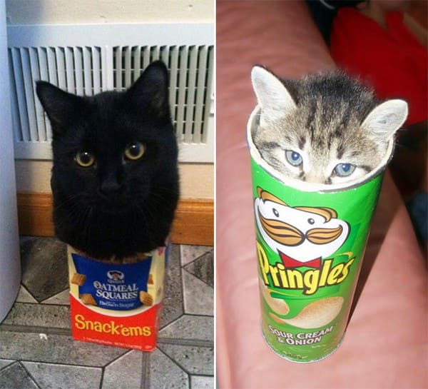 cute cats in food containers if i fits i sits, kitting in pringles container if i fit i sit, if i fits i sits, if i fit i sit, if it fits i sits, if i fits i sits cat, if i fit i sit cat, if it fits i sits cats, cats if i fits i sits, cat meme if it fits i sits, cat if i fits i sits, cat if it fits i sits, if i fit i sit picture, if i fits i sits picture, if i fits i sits pictures, if i fit i sit pictures, if i fits i sits image, if i fits i sits images, if i fit i sit image, if i fit i sit images, cats fitting and sitting, cats if i fits i sits picture, cats if i fits i sits pictures, cats if i fits i sits image, cats if i fits i sits images