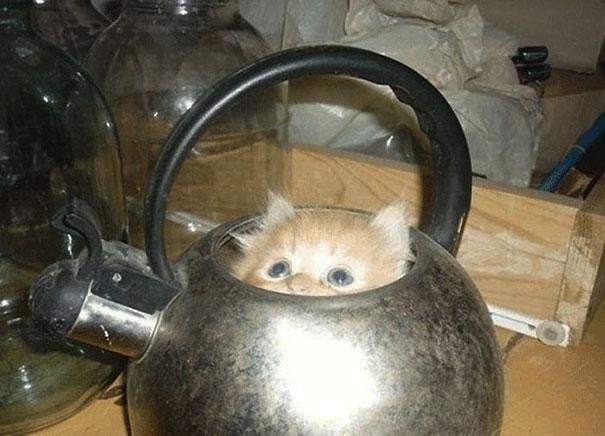 cat in tea kettle if i fits i sits, cat in tea kettle i fit i sit, if i fits i sits, if i fit i sit, if it fits i sits, if i fits i sits cat, if i fit i sit cat, if it fits i sits cats, cats if i fits i sits, cat meme if it fits i sits, cat if i fits i sits, cat if it fits i sits, if i fit i sit picture, if i fits i sits picture, if i fits i sits pictures, if i fit i sit pictures, if i fits i sits image, if i fits i sits images, if i fit i sit image, if i fit i sit images, cats fitting and sitting, cats if i fits i sits picture, cats if i fits i sits pictures, cats if i fits i sits image, cats if i fits i sits images