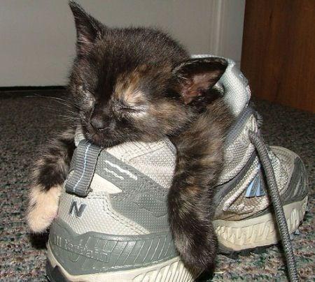 kitten in shoe, kittens in shoes, kittens in shoe, cute kittens in shoes, cute kitten in shoe, kittens sleeping in shoes, kitten sleeping in shoe, cute kittens sleeping in shoes, cute kitten sleeping in shoe