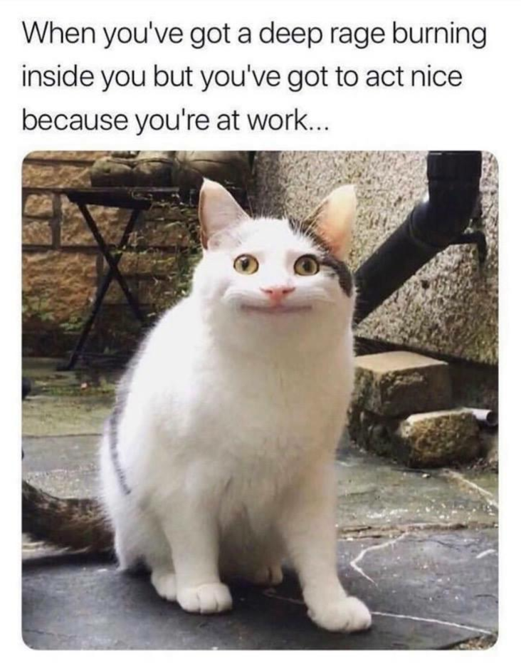Work meme about a cat making a neutral face