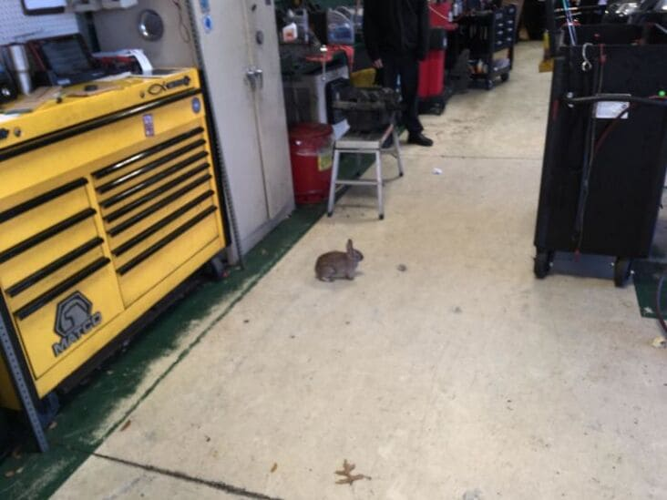 bunny in shop just rolled into the shop