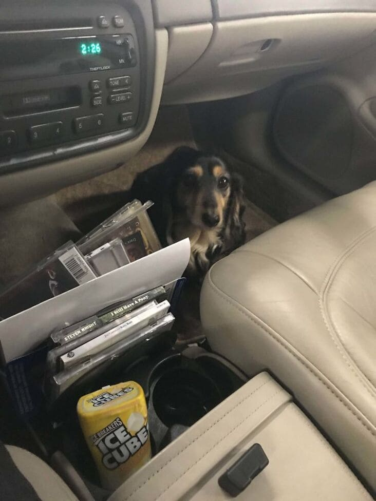 cute dog in car just rolled into the shop