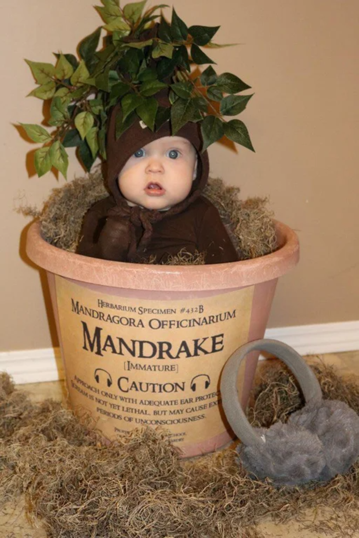Child in potted plant from Harry Potter costume