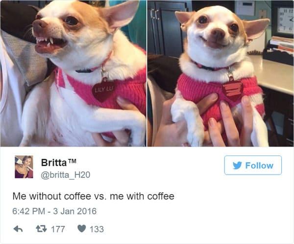 coffee meme, coffee memes, funny coffee memes, funny coffee meme, hilarious coffee meme, need coffee meme, morning coffee meme, coffee time meme, drinking coffee meme, more coffee meme, memes about coffee, hilarious coffee memes, funny memes about coffee, coffee meme images, coffee meme pictures, funny meme about coffee, best coffee memes, meme about coffee, coffee lover meme, coffee lovers meme, joke about coffee, coffee joke, coffee jokes, funny joke about coffee, funny coffee jokes, funny coffee joke, funny coffee tweet
